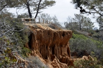 exploring-torrey-pines-state-park-14