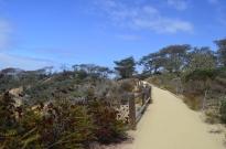 exploring-torrey-pines-state-park-2