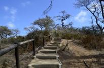 exploring-torrey-pines-state-park-3