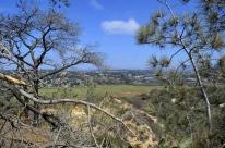 exploring-torrey-pines-state-park-4