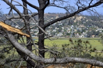 exploring-torrey-pines-state-park-5