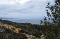 exploring-torrey-pines-state-park-8