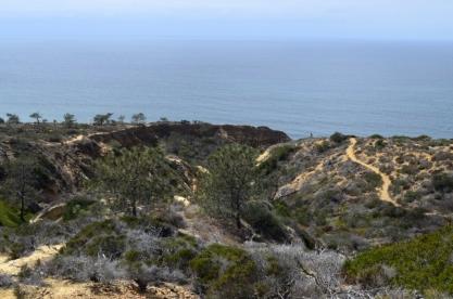 exploring-torrey-pines-state-park-9