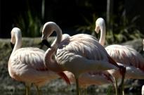 san-diego-zoo-safari-park-13