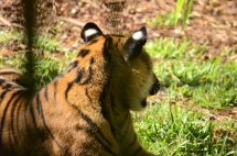 san-diego-zoo-safari-park-2