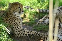 san-diego-zoo-safari-park-5