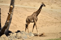 san-diego-zoo-safari-park-6