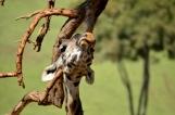 san-diego-zoo-safari-park-7