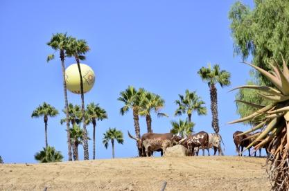 san-diego-zoo-safari-park-9