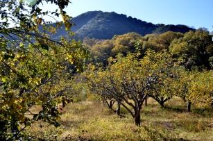 in-the-orchard