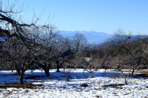 oak-glen-with-snow-part-1-1