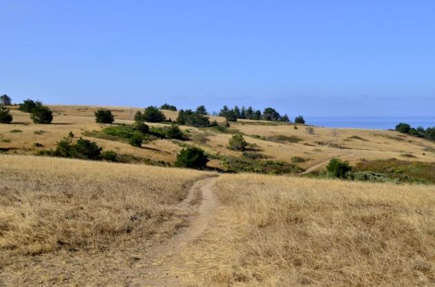 weekly-photo-challenge-path