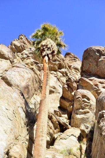 desert-palms-1