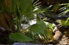 desert-palms-3