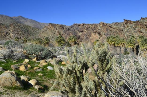 desert-palms-8