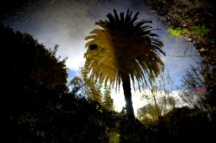 reflected-palm