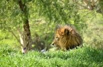 Animals in Profile (2)