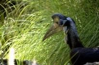 Animals in Profile (3)