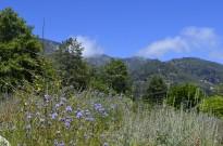 Afternoon on the Mountain, Oak Glen (2)