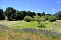 Afternoon on the Mountain, Oak Glen (3)