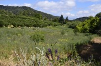Afternoon on the Mountain, Oak Glen (5)