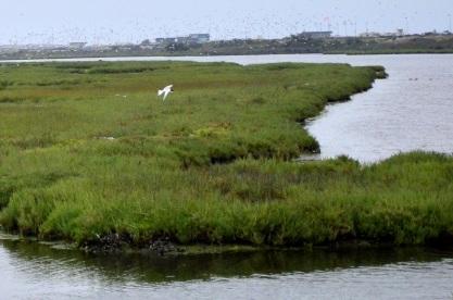 Bolsa Chica Ecological Reserve (1)