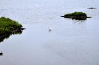 Bolsa Chica Ecological Reserve (2)