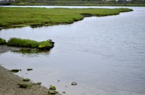 Bolsa Chica Ecological Reserve (3)