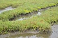 Bolsa Chica Ecological Reserve (4)