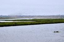 Bolsa Chica Ecological Reserve (5)