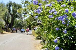 Los Rios Historic District, SJC (22)