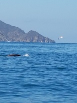Kayaking at Catalina Island (6)