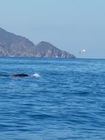 Kayaking at Catalina Island (6)