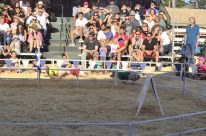 Racing Pigs at the Fair (4)