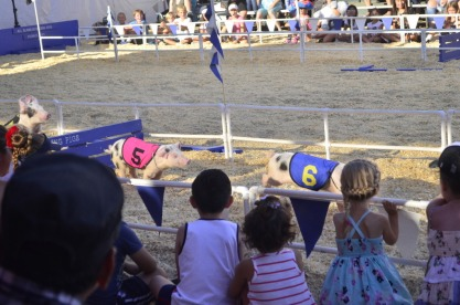 Racing Pigs at the Fair (9)
