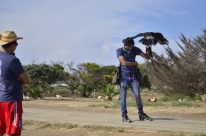 The Falconer (5)