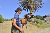 The Falconer (7)
