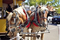 A Visit to Solvang, resized (2)
