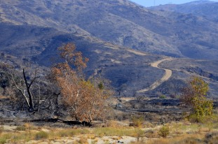 Scorched Earth, After the OC Fire (11)