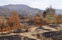 Scorched Earth, After the OC Fire (2)