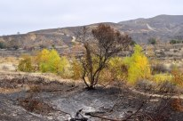 Scorched Earth, After the OC Fire (3)