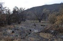 Scorched Earth, After the OC Fire (6)