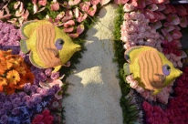 Closeups of Rose Parade Floats (17)