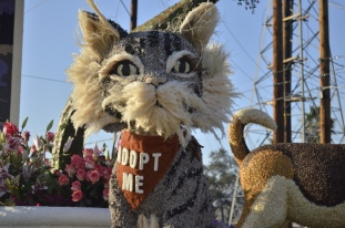 Closeups of Rose Parade Floats (18)