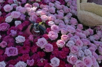 Closeups of Rose Parade Floats (3)