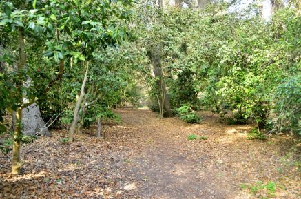Descanso Gardens in Early January, Part 1 (1)
