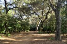 Descanso Gardens in Early January, Part 1 (3)