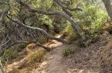 Descanso Gardens in Early January, Part 1 (7)