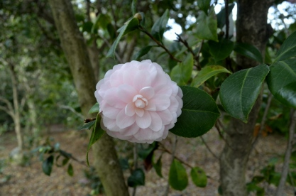 Descanso Gardens in Early January, part 2 (1)