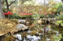 Descanso Gardens in Early January, part 2 (5)